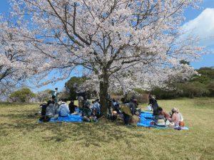 鏡山の桜の写真
